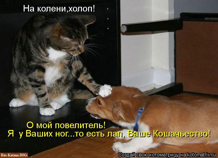 Котоматрица: На колени,холоп! О мой повелитель! Я  у Ваших ног...то есть лап, Ваше Кошачьество!