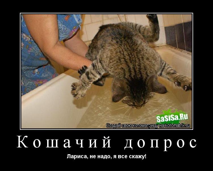 Котоматрица: Кошачий допрос Лариса, не надо, я все скажу!