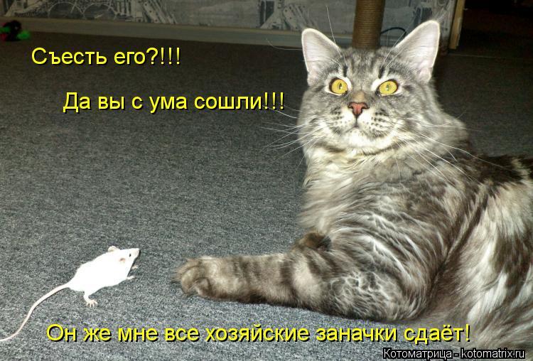 Котоматрица: Съесть его?!!!  Да вы с ума сошли!!! Он же мне все хозяйские заначки сдаёт!