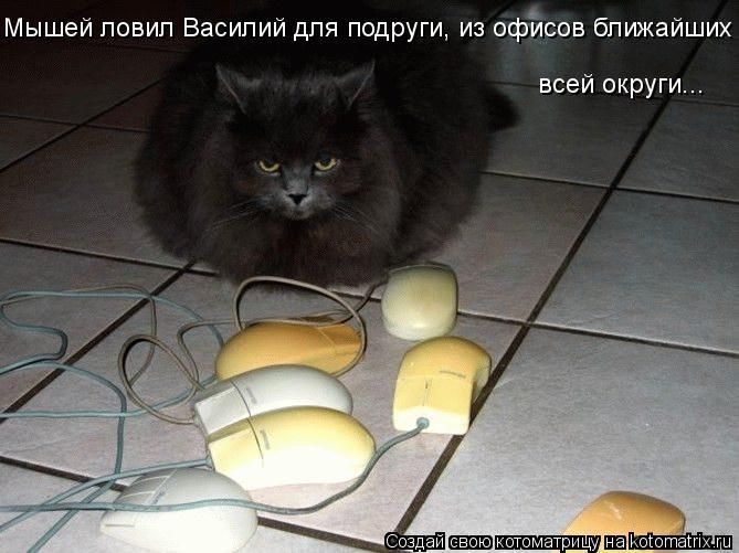 Котоматрица: Мышей ловил Василий для подруги, из офисов ближайших всей округи...