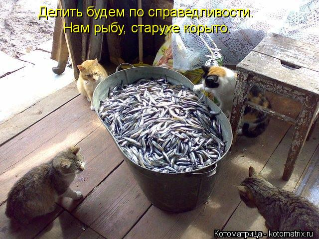 Котоматрица: Делить будем по справедливости. Нам рыбу, старухе корыто.