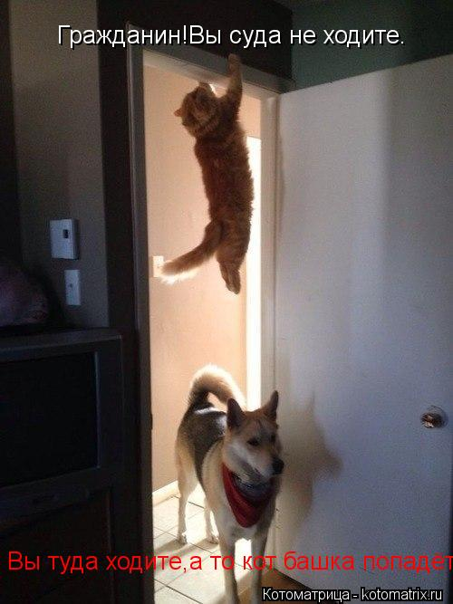 Котоматрица: Гражданин!Вы суда не ходите. Вы туда ходите,а то кот башка попадёт...