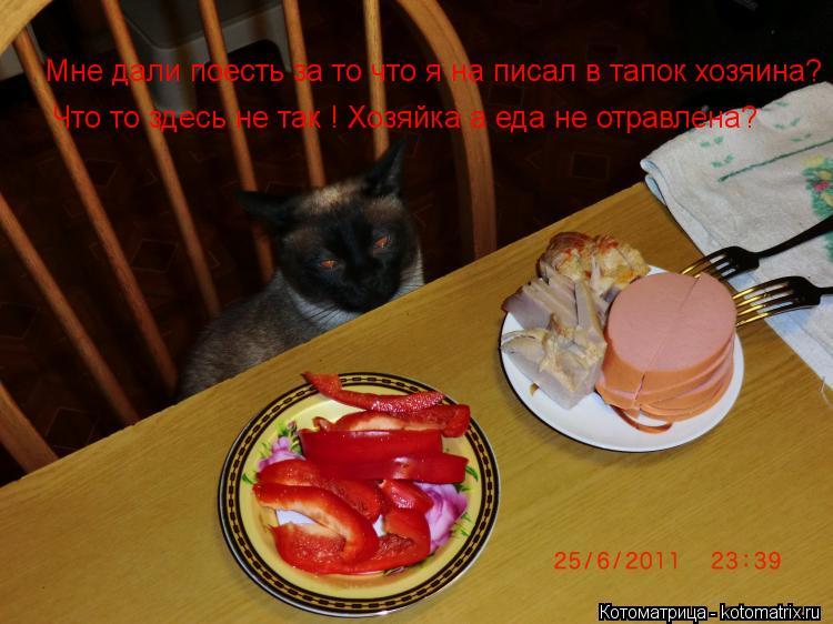 Котоматрица: Мне дали поесть за то что я на писал в тапок хозяина? Что то здесь не так ! Хозяйка а еда не отравлена?