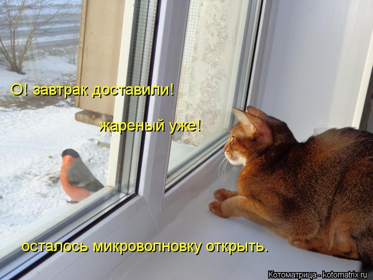 Котоматрица: О! завтрак доставили! жареный уже! осталось микроволновку открыть.