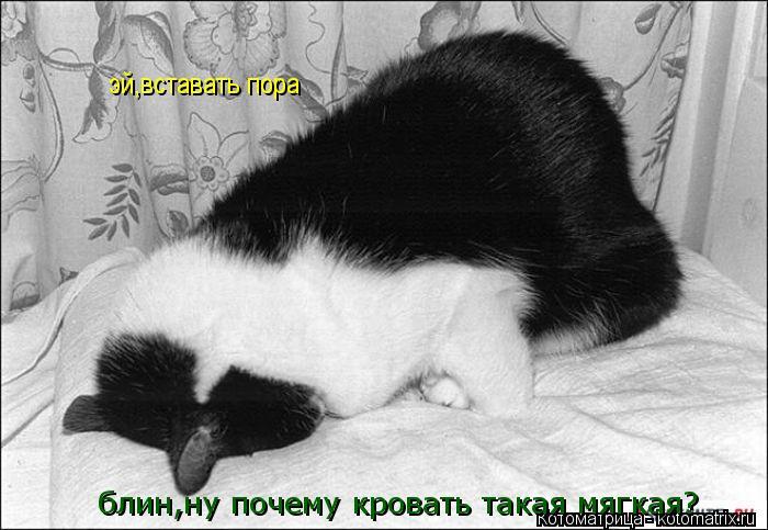 Котоматрица: блин,ну почему кровать такая мягкая? эй,вставать пора