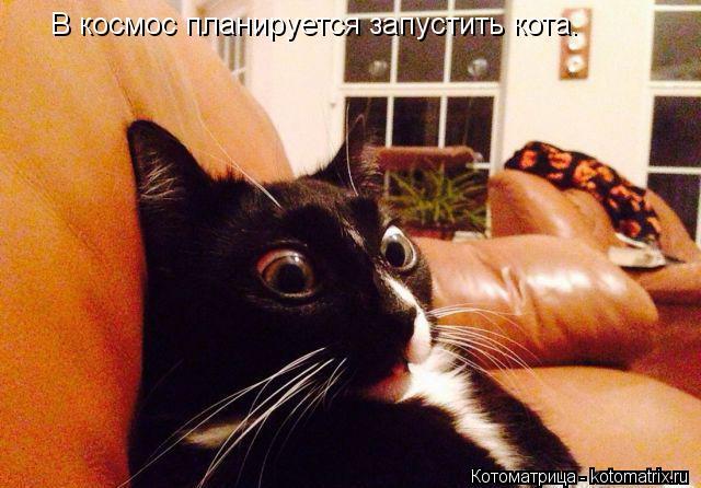 Котоматрица: В космос планируется запустить кота.