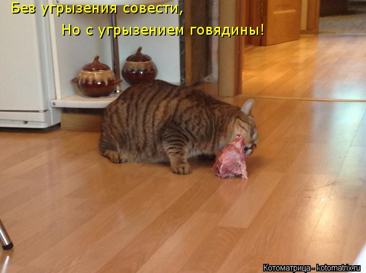 Котоматрица: Без угрызения совести, Но с угрызением говядины!