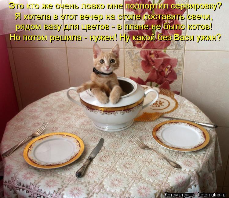 Котоматрица: Это кто же очень ловко мне подпортил сервировку? Я хотела в этот вечер на столе поставить свечи, рядом вазу для цветов - в плане не было котов