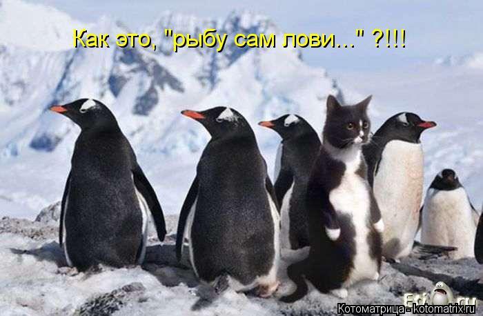 """Котоматрица: Как это, """"рыбу сам лови..."""" ?!!!"""