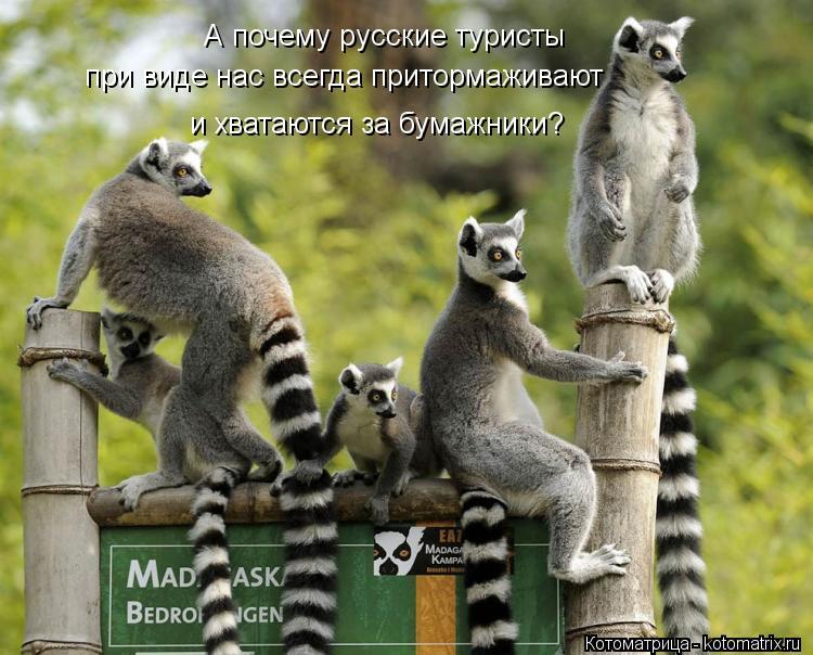 Котоматрица: А почему русские туристы при виде нас всегда притормаживают и хватаются за бумажники?