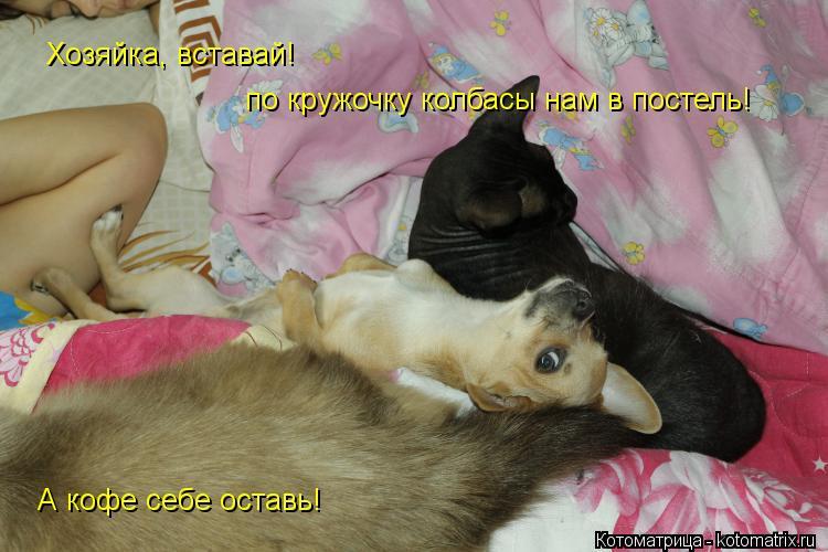 Котоматрица: Хозяйка, вставай! по кружочку колбасы нам в постель! А кофе себе оставь!