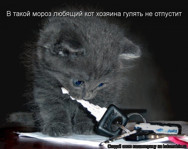 Котоматрица: В такой мороз любящий кот хозяина гулять не отпустит