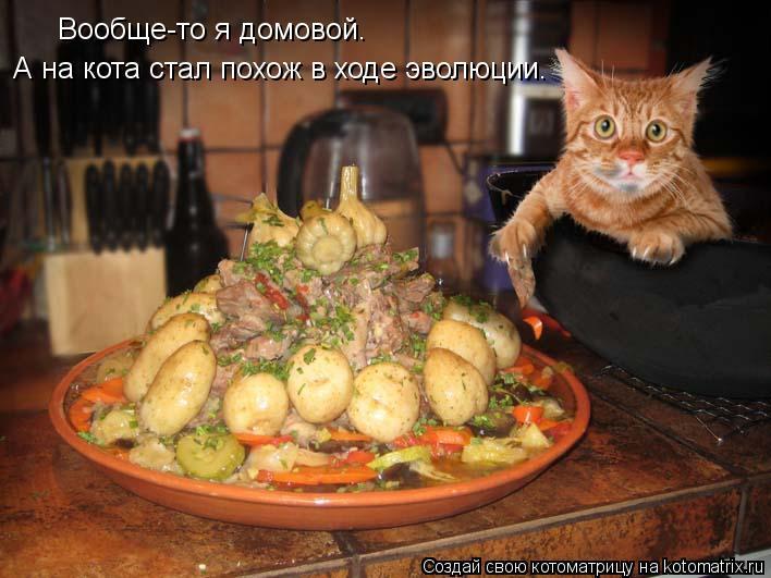 Котоматрица: Вообще-то я домовой. А на кота стал похож в ходе эволюции.