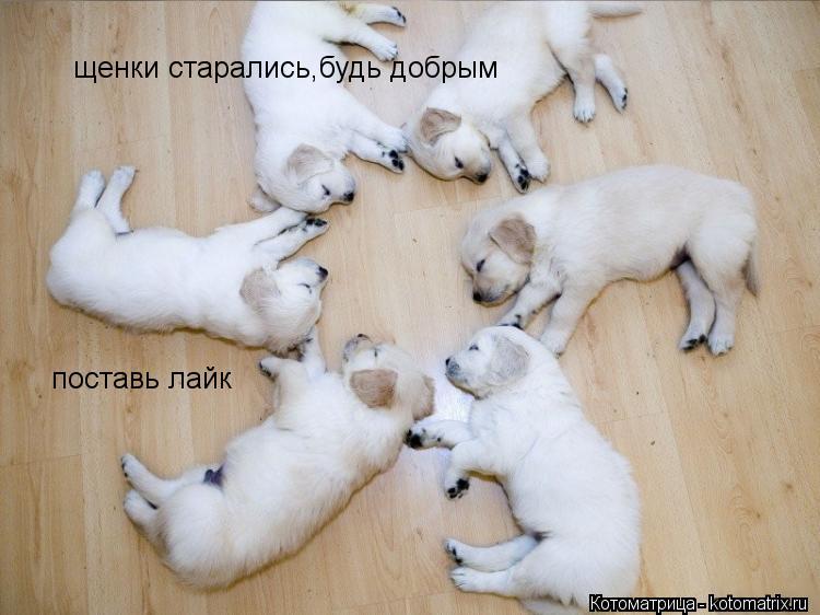 Котоматрица: щенки старались,будь добрым поставь лайк