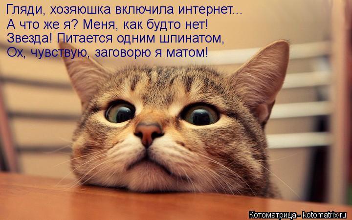 Котоматрица: Гляди, хозяюшка включила интернет... А что же я? Меня, как будто нет! Звезда! Питается одним шпинатом, Ох, чувствую, заговорю я матом!
