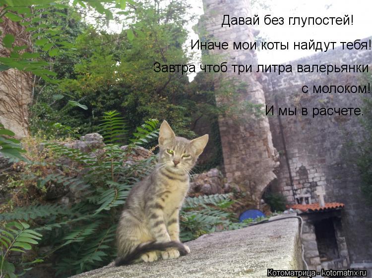 Котоматрица: Давай без глупостей! Иначе мои коты найдут тебя! Завтра чтоб три литра валерьянки с молоком! И мы в расчете.