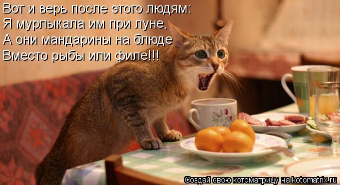 Котоматрица: Вот и верь после этого людям: Я мурлыкала им при луне, А они мандарины на блюде Вместо рыбы или филе!!!