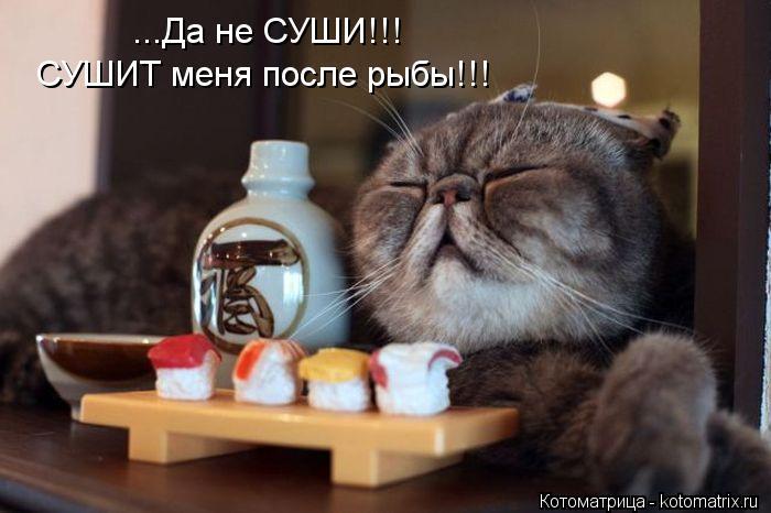 Котоматрица: ...Да не СУШИ!!!  СУШИТ меня после рыбы!!!