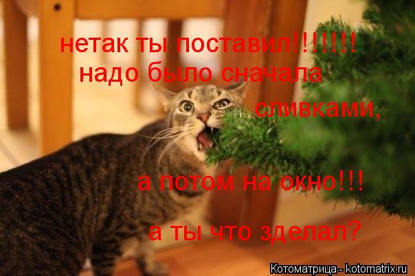 Котоматрица: нетак ты поставил!!!!!!! надо было сначала  сливками,  а потом на окно!!! а ты что зделал?