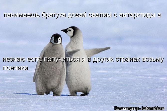 Котоматрица: панимаешь братуха довай свалим с антарктиды а незнаю есле получиться я в других странах возьму пончики