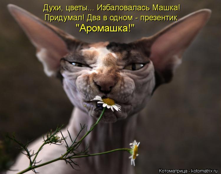 """Котоматрица: Духи, цветы... Избаловалась Машка! Придумал! Два в одном - презентик """"Аромашка!"""""""