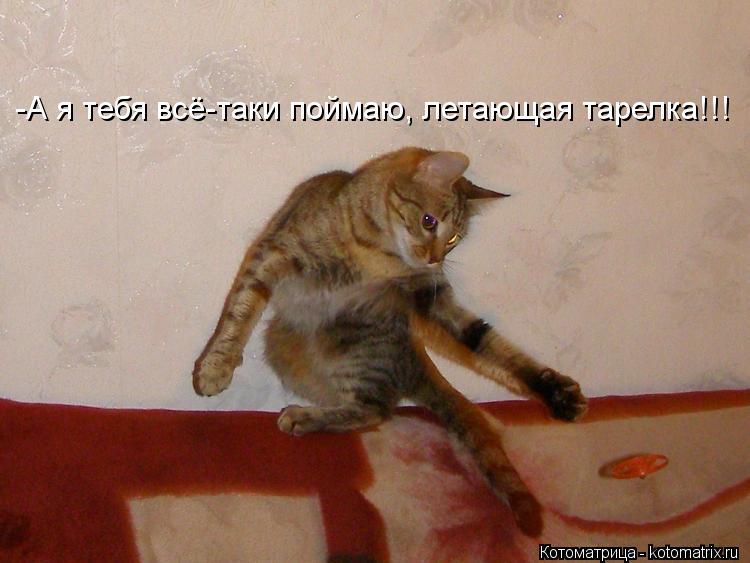 Котоматрица: -А я тебя всё-таки поймаю, летающая тарелка!!!