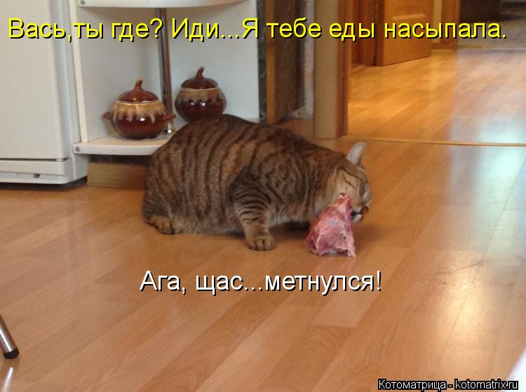 Котоматрица: Вась,ты где? Иди...Я тебе еды насыпала. Ага, щас...метнулся!