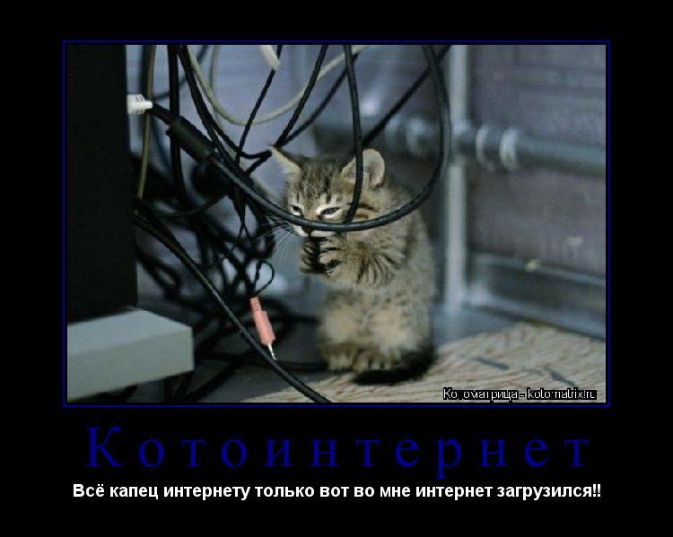 Котоматрица: Котоинтернет Всё капец интернету только вот во мне интернет загрузился!!