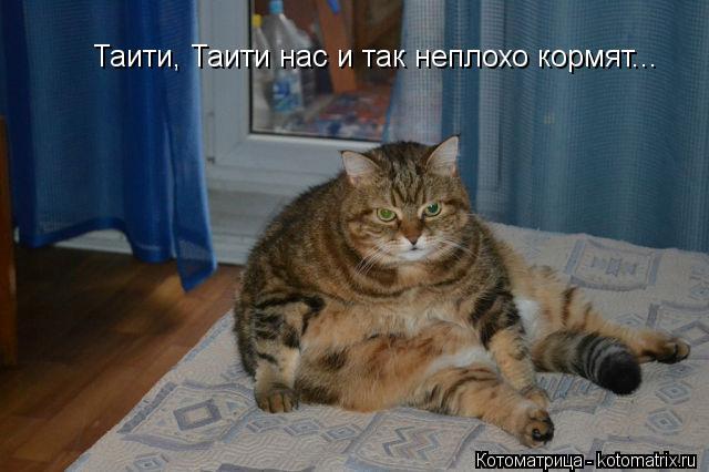 Котоматрица: Таити, Таити нас и так неплохо кормят...