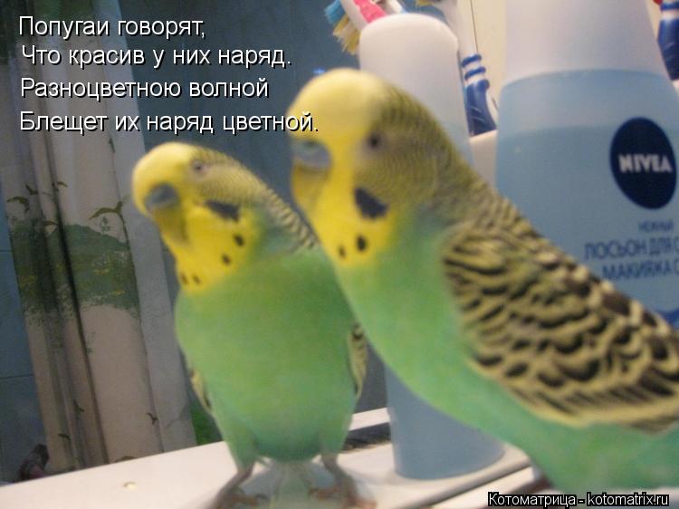 Котоматрица: Попугаи говорят, Что красив у них наряд. Разноцветною волной Блещет их наряд цветной.