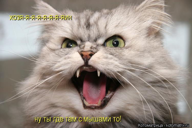 Котоматрица: хозя-я-я-я-я-я-я-яин ну ты где там с мышами то!