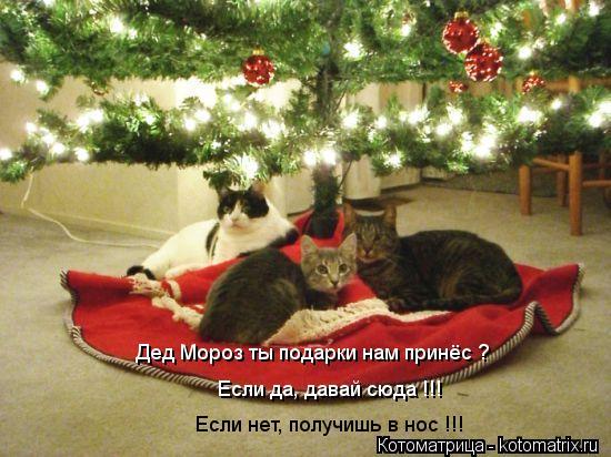 Котоматрица: Дед Мороз ты подарки нам принёс ? Если да, давай сюда !!! Если нет, получишь в нос !!!