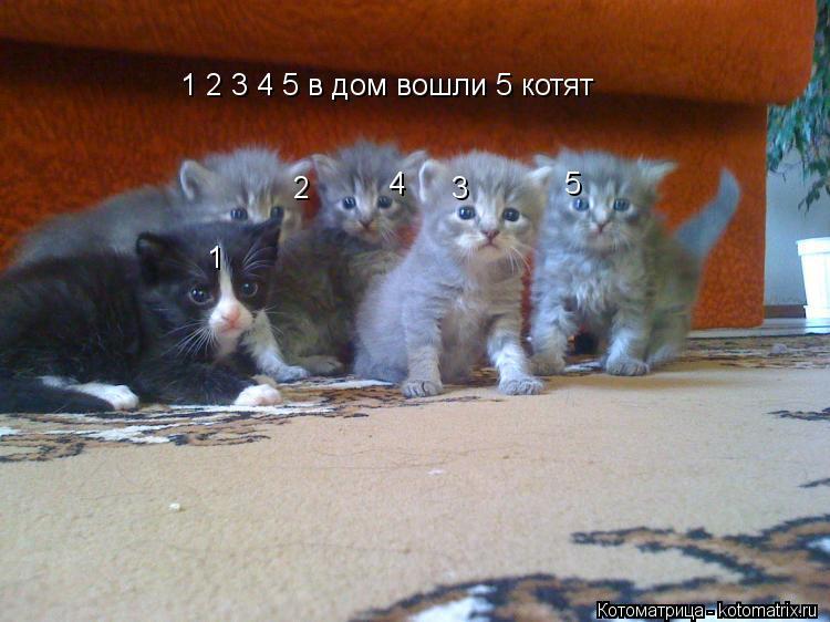 Котоматрица: 1 2 3 4 5 в дом вошли 5 котят 1                2                3            4                  5