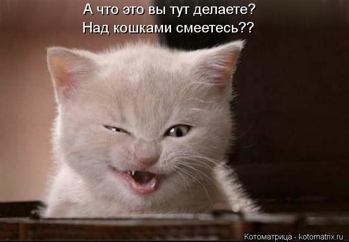 Котоматрица: А что это вы тут делаете? Над кошками смеетесь??