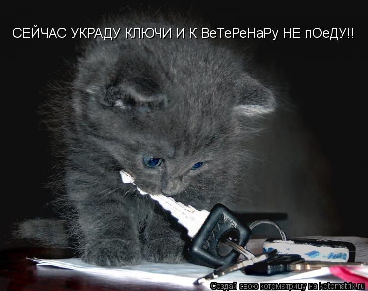 Котоматрица: СЕЙЧАС УКРАДУ КЛЮЧИ И К ВеТеРеНаРу НЕ пОеДУ!!