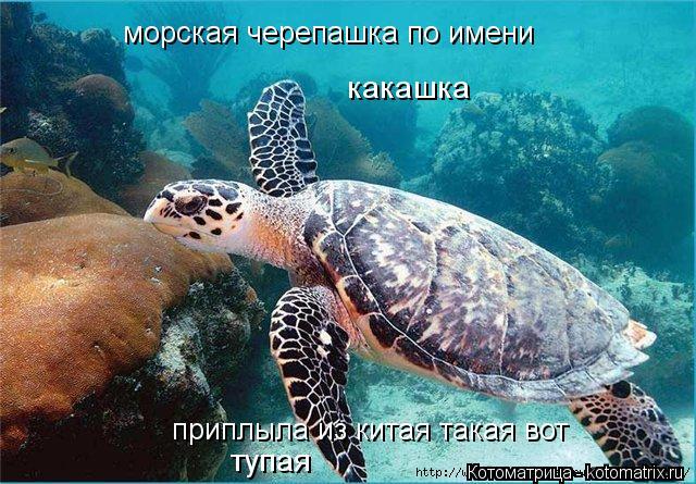 Котоматрица: морская черепашка по имени  приплыла из китая такая вот какашка тупая