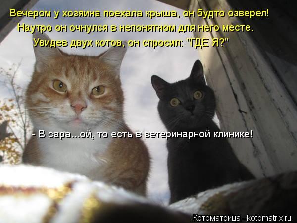 """Котоматрица: Вечером у хозяина поехала крыша, он будто озверел! Наутро он очнулся в непонятном для него месте. Увидев двух котов, он спросил: """"ГДЕ Я?"""" - В са"""