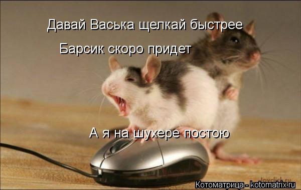 Котоматрица: Давай Васька щелкай быстрее Барсик скоро придет А я на шухере постою
