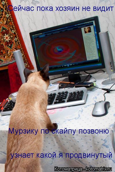 Котоматрица: Сейчас пока хозяин не видит Мурзику по скайпу позвоню  узнает какой я продвинутый