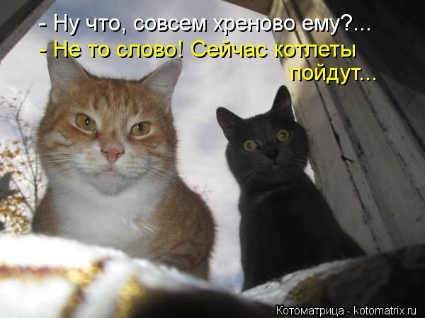 Котоматрица: - Ну что, совсем хреново ему?... - Не то слово! Сейчас котлеты  - Не то слово! Сейчас котлеты  пойдут...