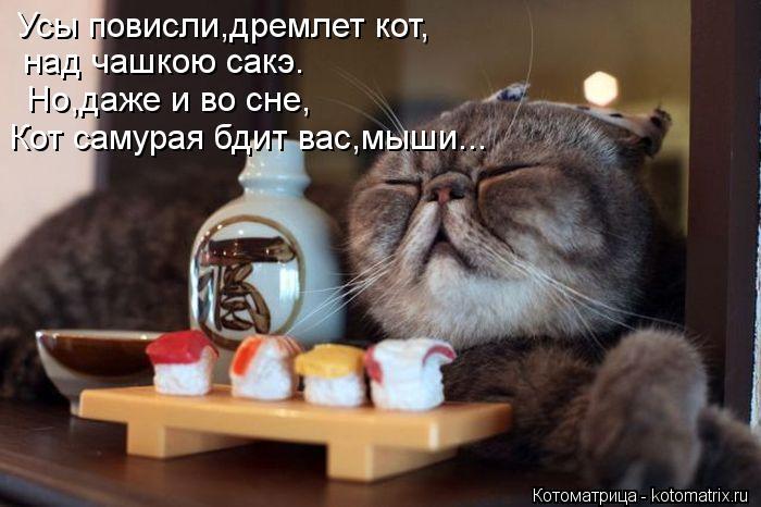 Котоматрица: Усы повисли,дремлет кот, над чашкою сакэ. Но,даже и во сне, Кот самурая бдит вас,мыши...