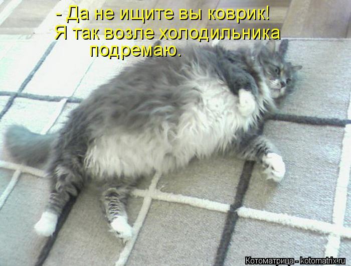 Котоматрица: - Да не ищите вы коврик! Я так возле холодильника подремаю.