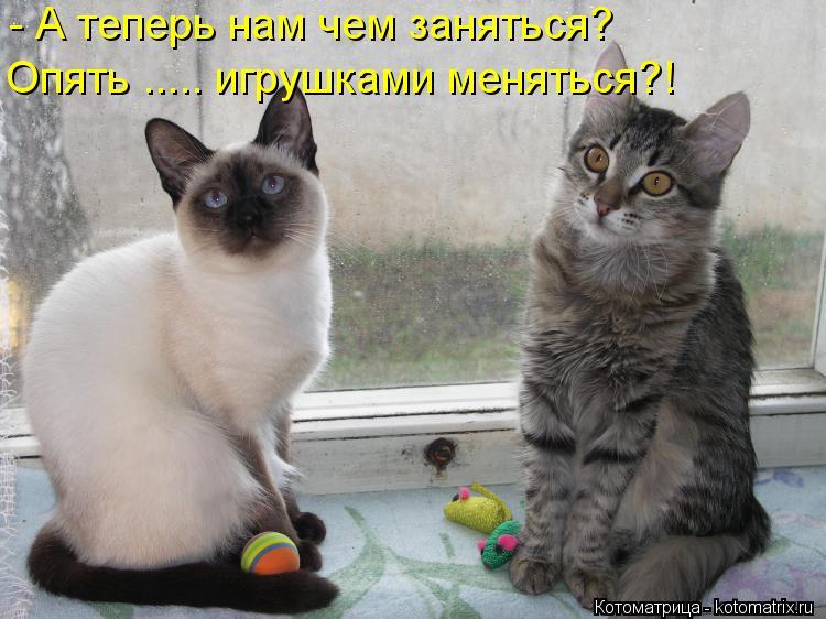 Котоматрица: - А теперь нам чем заняться? Опять ..... игрушками меняться?!