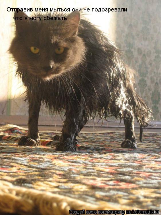 Котоматрица: Отправив меня мыться они не подозревали что я могу сбежать
