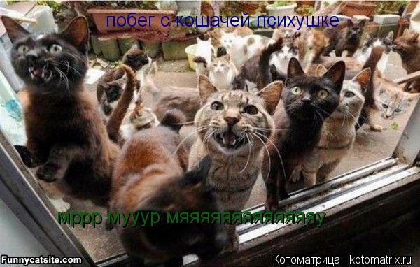 Котоматрица: побег с кошачей психушке  мррр мууур мяяяяяяяяяяяяяу