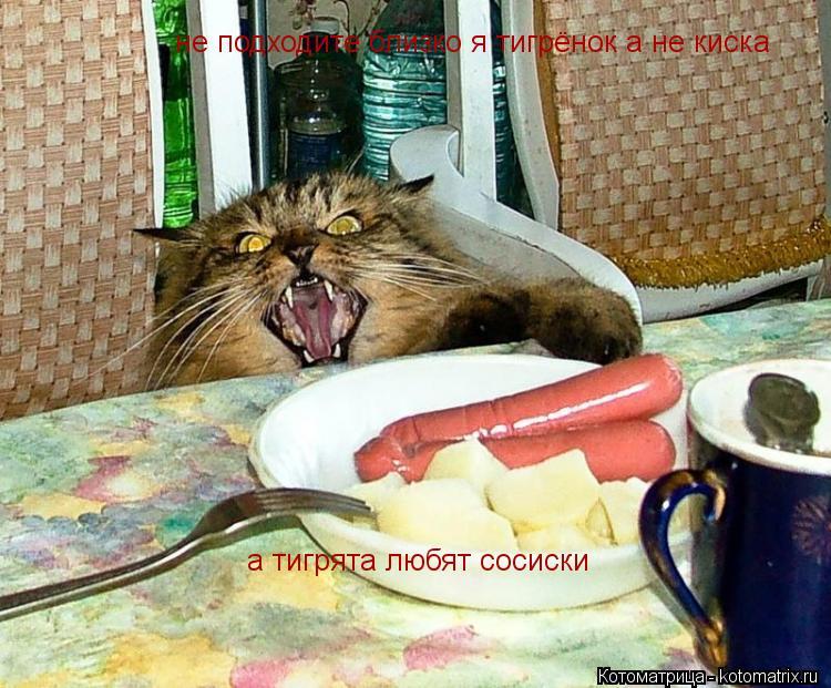 Котоматрица: не подходите близко я тигрёнок а не киска а тигрята любят сосиски