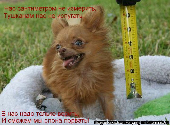 Котоматрица: Нас сантиметром не измерить,              И сможем мы слона порвать!       В нас надо только верить,           Тушканам нас не испугать,