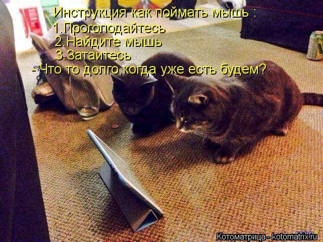 Котоматрица: Инструкция как поймать мышь : 1.Проголодайтесь 2.Найдите мышь 3.Затаитесь - Что то долго,когда уже есть будем?