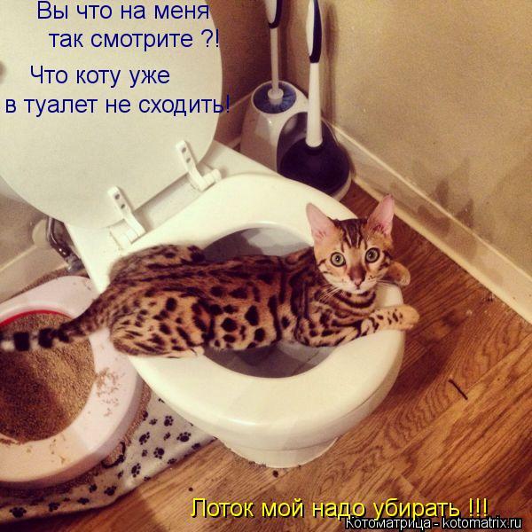 Котоматрица: Вы что на меня   так смотрите ?! Что коту уже в туалет не сходить! Лоток мой надо убирать !!!