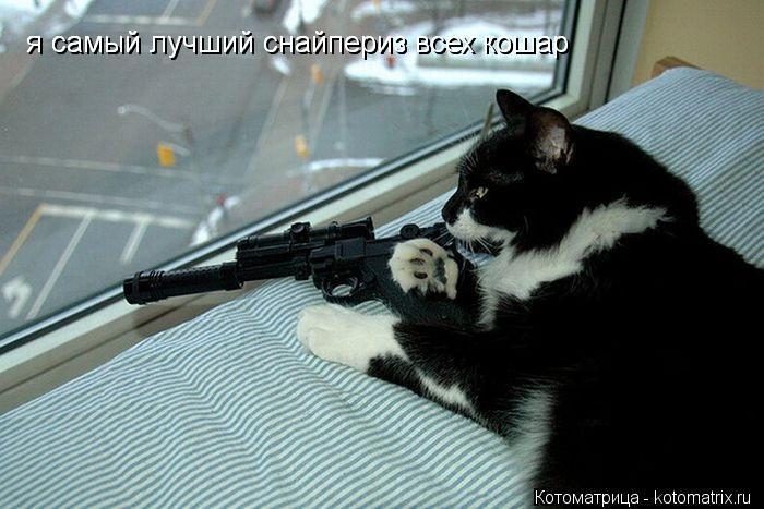 Котоматрица: я самый лучший снайпериз всех кошар я самый лучший снайпериз всех кошар